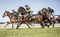 All remains on track for a return to racing | The Border Mail