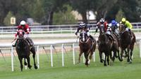 Raceday focus with Ray Thomas | The Daily Telegraph