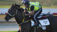 Dale eyes return with star galloper | Andrew Dale Racing