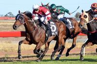 It's A Fireball flies at Albury | Andrew Dale Racing