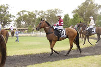 Framework horse for the course at Corowa | Andrew Dale Racing