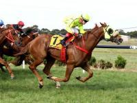 Luckyi'mbarefoot Wins at Terang