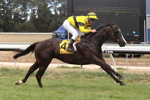 Mr Obvious Wins His Maiden At Colac