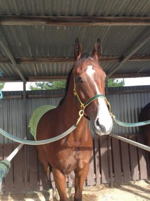 Stable Kicks The Week Off Well With Ardroy Winning