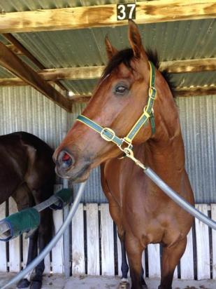 Stable Double At Avoca