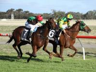 Stable Quinella on Stawell Cup Day