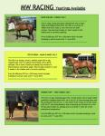 MW Racing Yearling Brochure