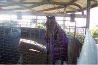 Horse walker.PNG