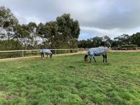 Day paddocks on training side.ajpg