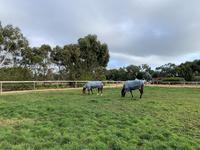 Day paddocks on training side.jpg