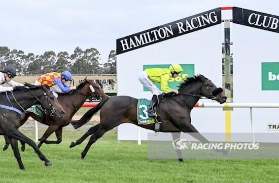 Sunburnt Scores Win At Hamilton