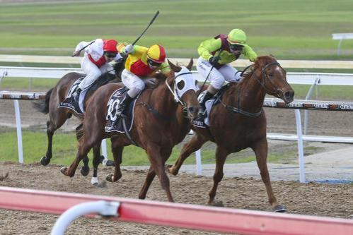 VICTORIAN CROWN WINS GEELONG MAIDEN 1300M