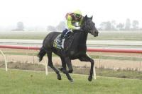 LATE CHARGE WINS ECHUCA 2YO SV GOLD MAIDEN 1200m