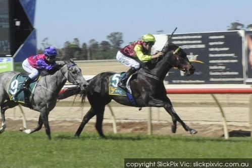 FLYING KYLE WINS ECHUCA BM64 1600m