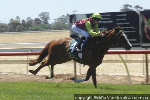 GOLD HOFFA WINS ECHUCA 3YO MAIDEN