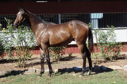 NEW LISTING VIC - DOMESDAY YEARLING COLT