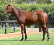ALL AMERICAN YEARLING BAY FILLY – SUPERVOBIS NOMINATED