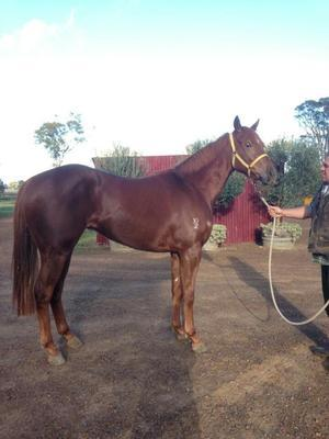 SET SQUARES 2YO HALF SISTER SALLANCHES TRIALS WELL AND LOOKS PROMISING
