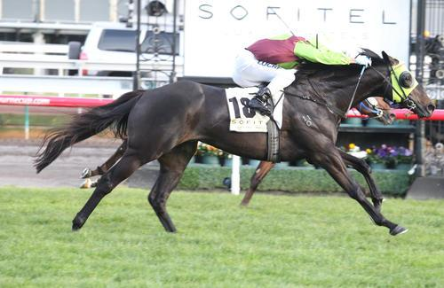 LATE CHARGE TO STAND AT STUD IN VICTORIA