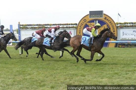 Top Sight Caulfield 15th Jan 2014.jpg