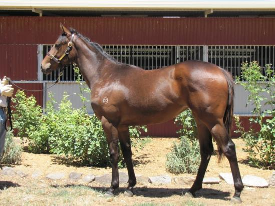 Bon - Elite Filly 2nd Jan 13.1.jpg