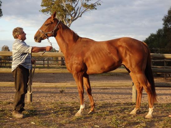 Horses 23.2.16 001.jpg