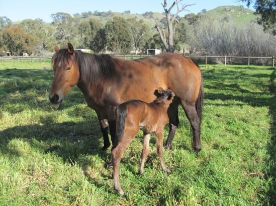 Elite & Foal 15.9.1.jpg
