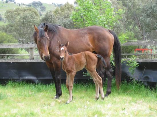 Precious Jewel  & Foal 24th Sept 2014.jpg