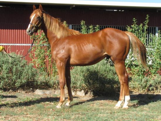 Bon Hoffa Goldsmobile colt 18th Feb 2014.jpg