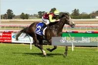 DESERT GREY WINS MAIDEN