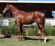 Bon Hoffa Chestnut Yearling Colt