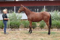 Bon Hoffa Poetic Faith Bay Filly