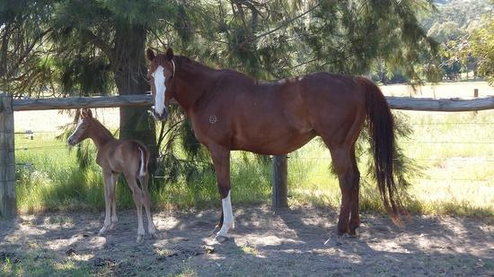 Gold Hoffa Helmet filly 27 Oct 2017.2.JPG