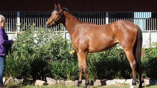 Bon Hoffa 2YO Bay Filly