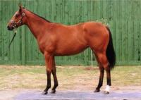 Newminster Thoroughbreds completes first syndication