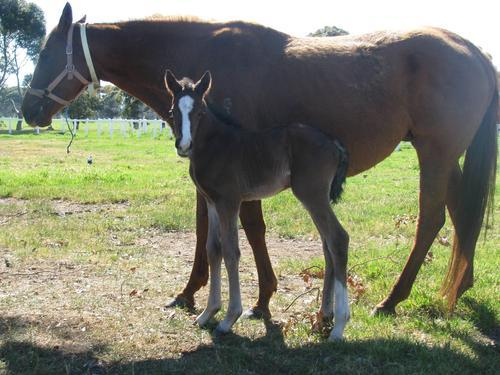 First foal born for the season!