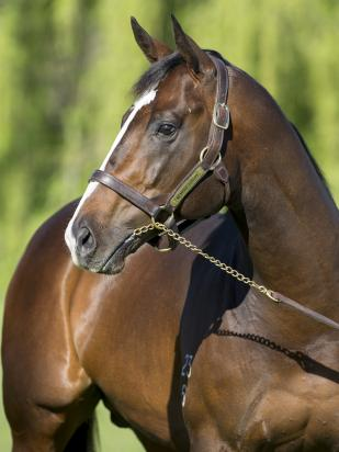 Sixmorewinners for new Victorian Sire (TBV)
