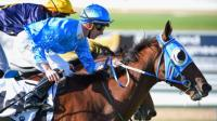Berisha On Caulfield Cup Path