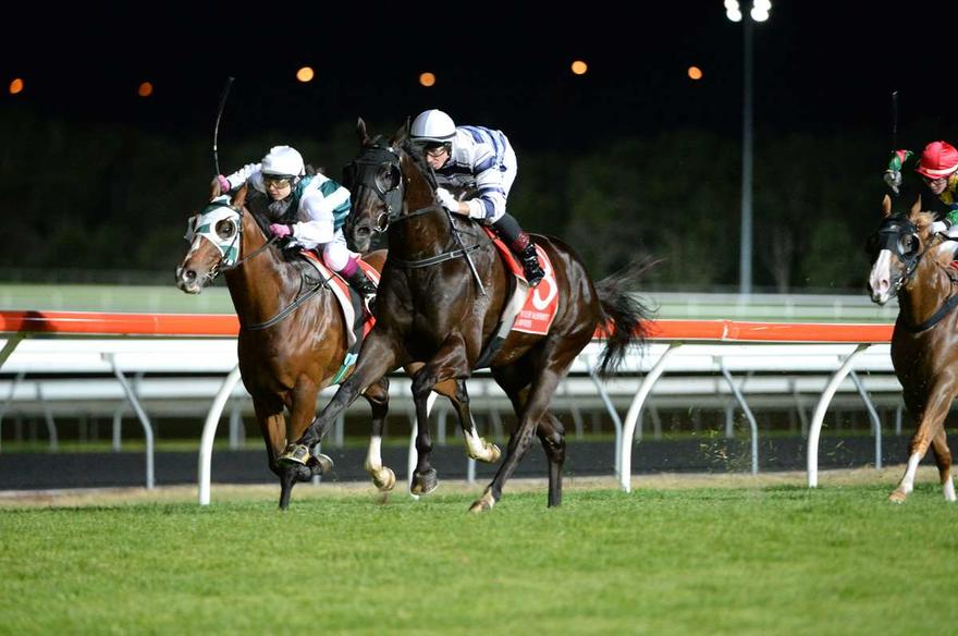 D'Harmony wins at the Sunshine Coast