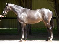 Sizzling Colt Joins Stable