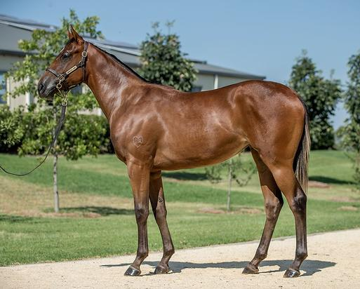 Zoustar - All Sewn Up Filly