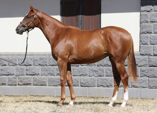 Star Filly Bred to Run
