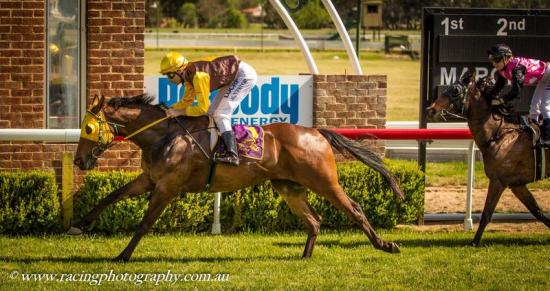 BUDGEE BOY WINNING AT MUDGEE