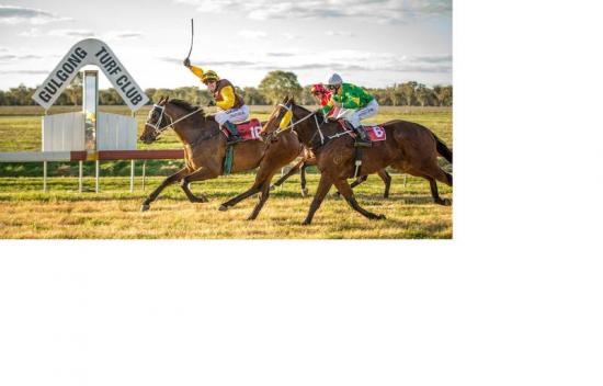 BUDGEE BOY TAKES OUT THE 2015 GULGONG CUP