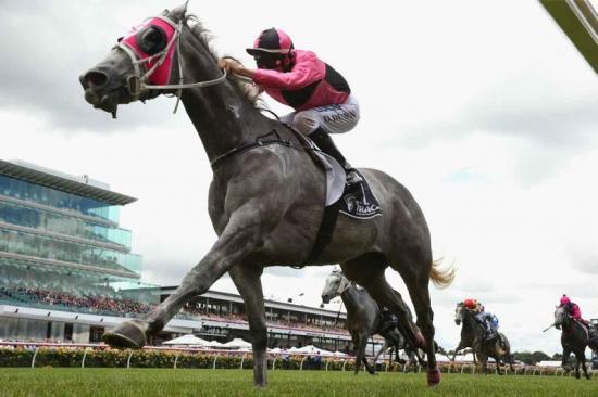 Bush horse wins greys race at Flemington