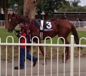 Bazeley Racing in Form