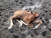 First foal of the year!