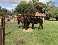 YEARLINGS CATCHING SOME RAYS