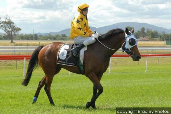 Miello Hoping For Some Luck At Kensington Meeting