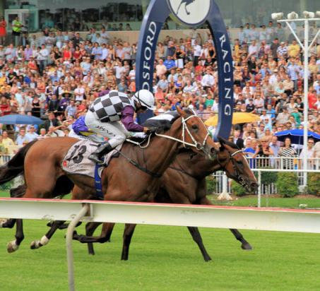 Star Approach And Spinning Gold To Compete At Gosford On Wednesday